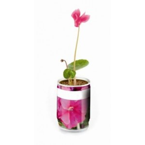 Can Petunia Plant